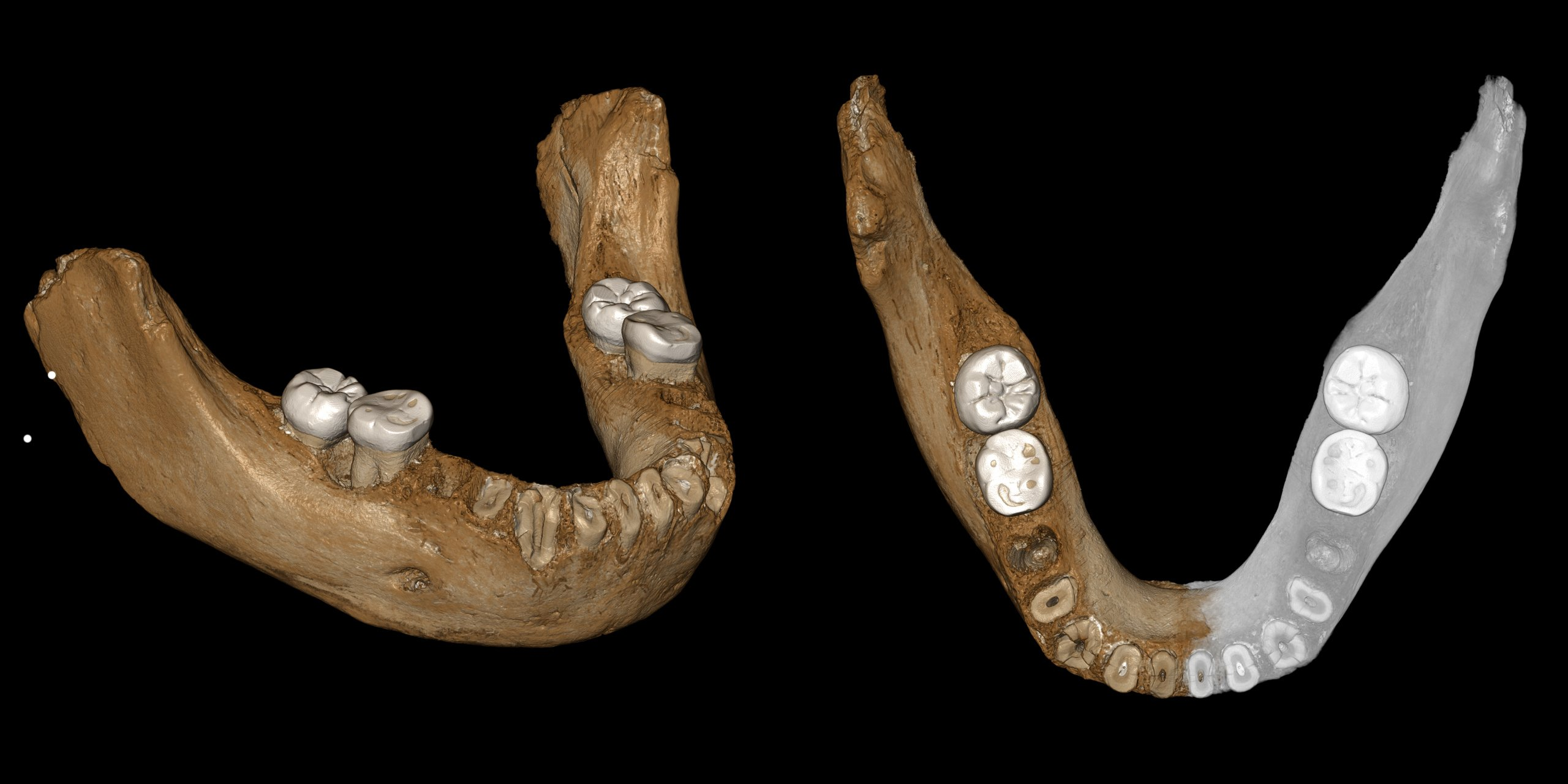 Chinese fossil sheds light on mysterious Neanderthal kin – The Associated Press